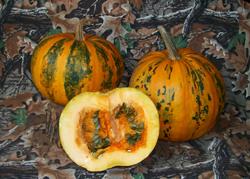 Styrian Pumpkin
